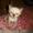 Сиамскиий (тайский) котенок #705268