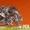 Шайба стопорная уменьшенная ГОСТ 13464-77 (ГОСТ Р ИСО 1891-40.1) - Изображение #2, Объявление #1471911
