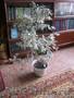Цветок,  комнатное растение