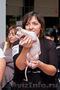 Чистокровные канадские сфинксы;  голые,  беcшерстные котята
