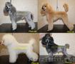 Стрижка собак в Астрахани
