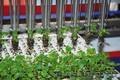 Роботизированная машина по пересадке растений RW Urbinati - Изображение #5, Объявление #1578537