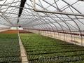 Теплица промышленная/фермерская ORIENTE RUS