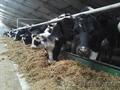 Импорт и Экспорт крупнорогатого скота